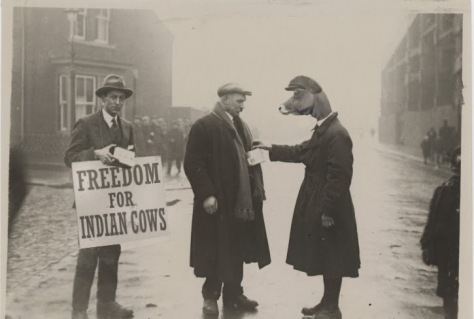 Freedom for Indian Cows